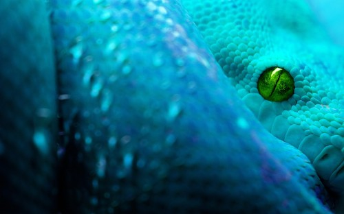 snake_eye_live_wallpaper_free