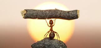 ant-on-money